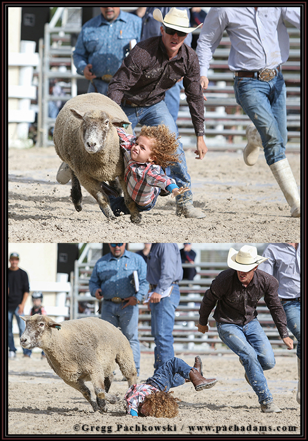 Chase Oake, 4, of Fort Myers, falls off his sheep during the Mutton Bustin' competition.